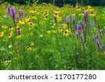 Prairie flowers at Shabonna Lake State Park, Illinois
