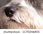 close up macro view of a cute...   Shutterstock . vector #1170246853