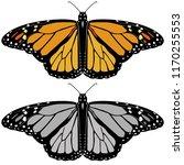 butterfly monarch illustration... | Shutterstock .eps vector #1170255553