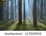 Beautiful Scene Of Forest...