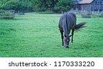 black stallion with white star... | Shutterstock . vector #1170333220
