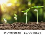 growing plant step with sunrise.... | Shutterstock . vector #1170340696