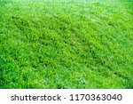 urban photography  a lawn is an ... | Shutterstock . vector #1170363040