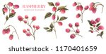 watercolor raspberry. botanical ... | Shutterstock . vector #1170401659