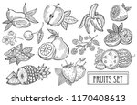 hand drawn decorative fruits... | Shutterstock .eps vector #1170408613