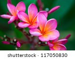 Branch Of Tropical Pink Flower...