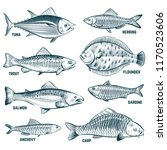 sketch fishes. trout and carp ... | Shutterstock .eps vector #1170523606
