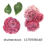 Stock photo set of red and pink roses in isolated background watercolor illustration 1170558160
