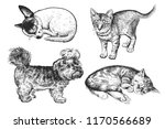 cute puppies and kittens set.... | Shutterstock .eps vector #1170566689
