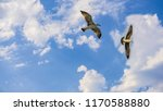 birds and freedom on sky. | Shutterstock . vector #1170588880