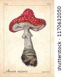 Amanita Muscaria Mushroom...