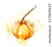 pumpkin. hand drawn watercolor... | Shutterstock . vector #1170659623