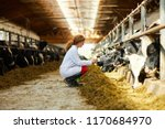 Stock photo side view portrait of cute female veterinarian caring for cows sitting down in sunlit barn copy 1170684970