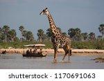 selous game reserve  tanzania   ...   Shutterstock . vector #1170691063