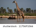 selous game reserve  tanzania   ... | Shutterstock . vector #1170691066