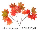 autumn maple leaves | Shutterstock . vector #1170723970
