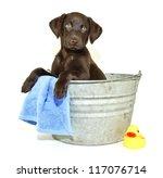 Lab Puppy Sitting In A Bath Tu...