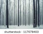 Winter Foggy Beech Forest Scene.