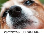 closeup of dog's nose and snout ... | Shutterstock . vector #1170811363