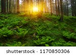 trees in forest and fog | Shutterstock . vector #1170850306