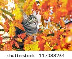 Beautiful Kitty Sitting On The...
