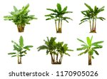 A Collection Banana Trees Isolated - Fine Art prints