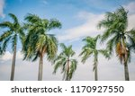 beauty of the royal palm tree...   Shutterstock . vector #1170927550