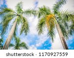 beauty of the royal palm tree...   Shutterstock . vector #1170927559