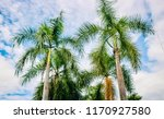 beauty of the royal palm tree...   Shutterstock . vector #1170927580