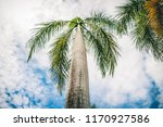 beauty of the royal palm tree...   Shutterstock . vector #1170927586