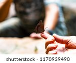 butterfly  the charaxes... | Shutterstock . vector #1170939490