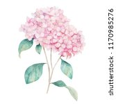 watercolor hand drawn... | Shutterstock . vector #1170985276
