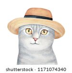 Portrait Of Cute Gray Pet Kitt...