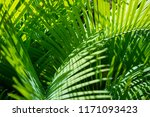 intertwined green fronds of... | Shutterstock . vector #1171093423
