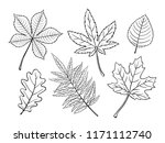 Hand Drawn Autumn Leaves Maple  ...