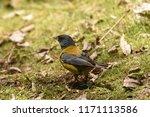 near santiago  chile. dec. 31 ... | Shutterstock . vector #1171113586