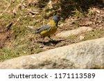near santiago  chile. dec. 31 ... | Shutterstock . vector #1171113589