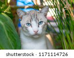 portrait of a cat hiding behind ... | Shutterstock . vector #1171114726