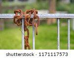 old rusty metal chain hanging... | Shutterstock . vector #1171117573