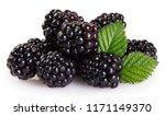 fresh blackberry isolated on... | Shutterstock . vector #1171149370