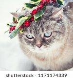 portrait of a cat wearing... | Shutterstock . vector #1171174339