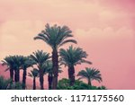 palm trees against sunset sky.... | Shutterstock . vector #1171175560