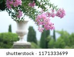 beautiful pink flowers on... | Shutterstock . vector #1171333699