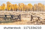 An autumn landscape scene in Jackson Hole, Wyoming, including an old style buck and rail wooden ranch fence and colorful aspen trees in early morning light. - stock photo