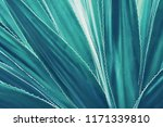 agave plant leaves in blue tone ... | Shutterstock . vector #1171339810