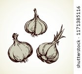 ripe dry eco allium sativum... | Shutterstock .eps vector #1171385116