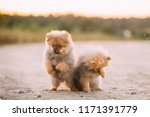 two young happy playful puppies ... | Shutterstock . vector #1171391779