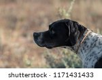 profile view of dotted pointer... | Shutterstock . vector #1171431433