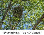 bird nest in the branches. | Shutterstock . vector #1171433806