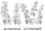monochrome grapes branches set. ...   Shutterstock .eps vector #1171462609